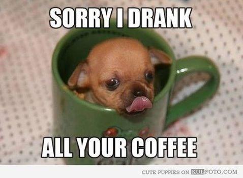 Dog - SORRYIDRANK ALL YOUR COFFEE CUTE PUPPIES ON KULFOTO.COM