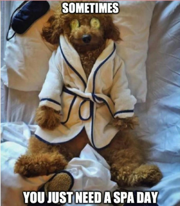 Teddy bear - SOMETIMES YOU JUST NEED A SPA DAY