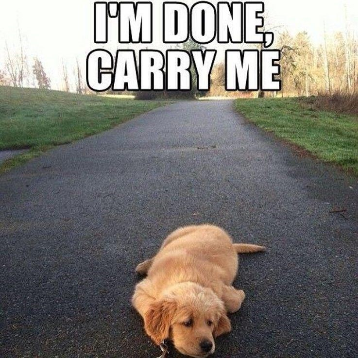 Dog - I'M DONE CARRY ME