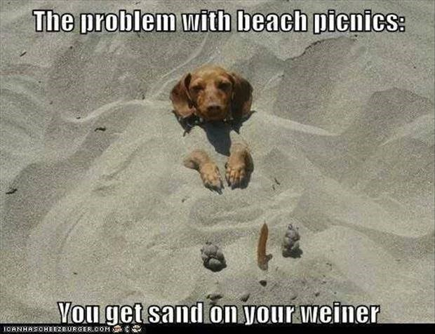 Dog - The problem with beach picnics: Vou get sand on your weiner ICANHASCHEE2EURGER.OOM