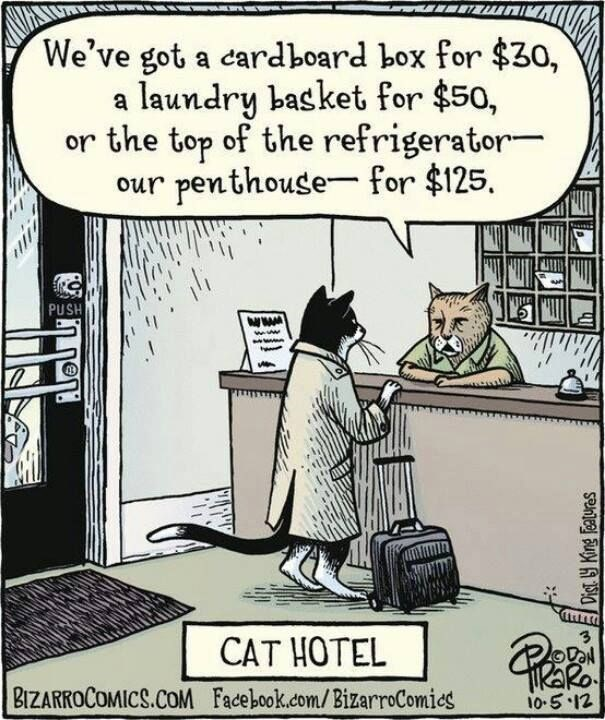 Cartoon - We've got a cardboard box for $30, a laundry basket for $50, or the top of the refrigerator our penthouse- for $125 PUSH www www www CAT HOTEL KaRo 10-5.12 BIZARROCOMICS.COM Facebook.com/BizarroComies Dist y King Featuraes