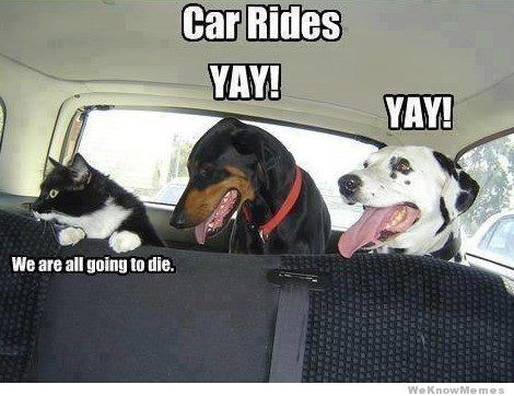 Dog - Car Rides YAY! YAY! We are all going to die. We KnowMemes