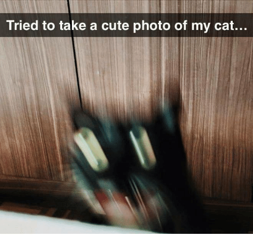 Text - Tried to takea cute photo of my cat...