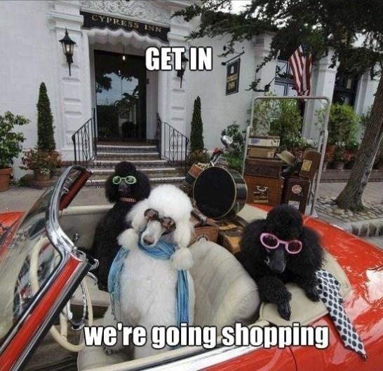 Dog - CYPRESS INN GET IN we're going shopping