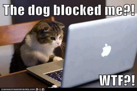 Cat - The dog blocked me?! WTF?! ICANHASCHEE2EURGER.COM