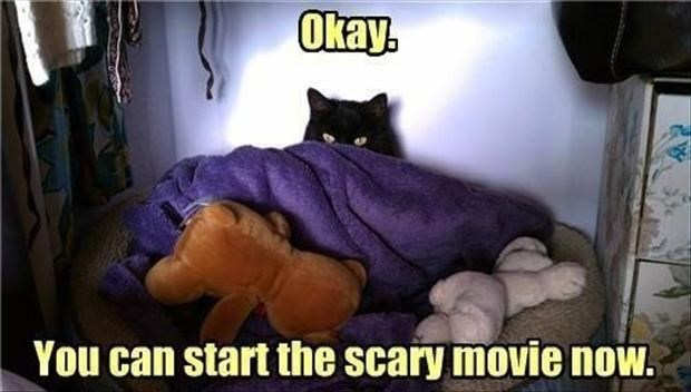 Cat - Okay. You can start the scary movie now.