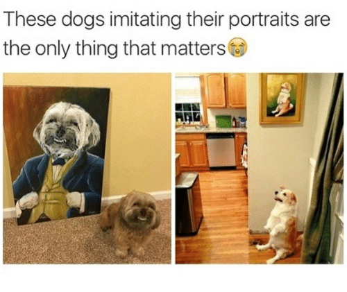 Dog breed - These dogs imitating their portraits are the only thing that matters