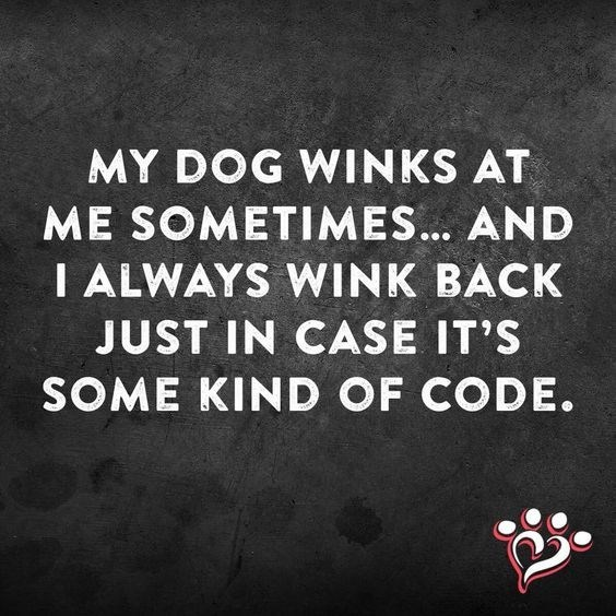 Text - MY DOG WINKS AT ME SOMETIMES... AND I ALWAYS WINK BACK JUST IN CASE IT'S SOME KIND OF CODE.