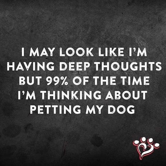 Text - I MAY LOOK LIKE I'M HAVING DEEP THOUGHTS BUT 99% OF THE TIME I'M THINKING ABOUT PETTING MY DOG