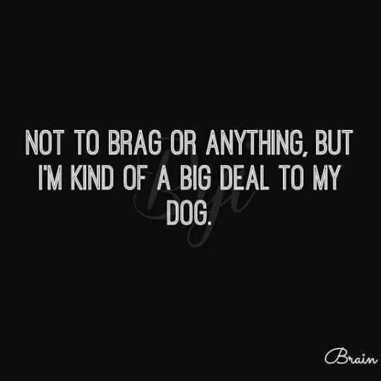 Text - NOT TO BRAG OR ANYTHING, BUT IM KIND OF A BIG DEAL TO MY DOG. Brain