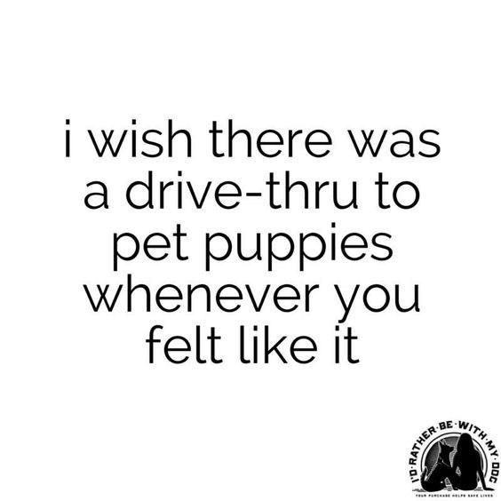 Text - i wish there was a drive-thru to pet puppies whenever you felt like it WITH MY RATHER a.l