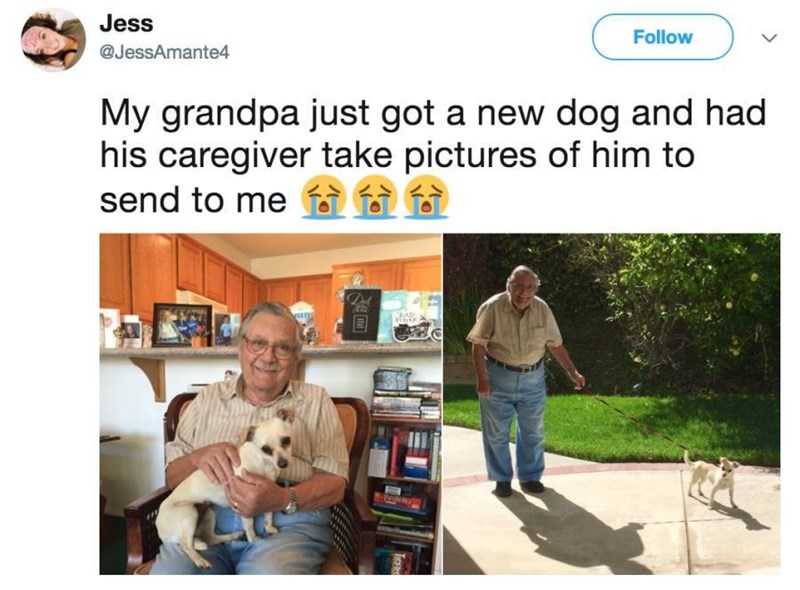 Adaptation - Jess Follow @JessAmante4 My grandpa just got a new dog and had his caregiver take pictures of him to send to me f i i EAR P PeduR