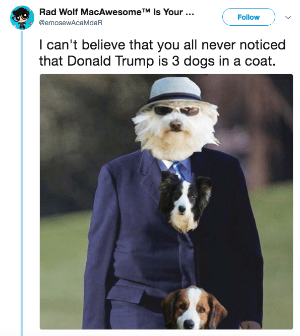 Dog - Rad Wolf MacAwesomeTM Is Your ... Follow @emosewAcaMdaR I can't believe that you all never noticed that Donald Trump is 3 dogs in a coat.