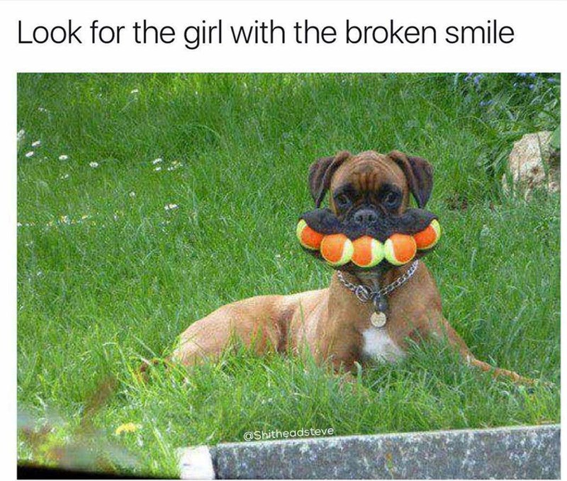 Dog - Look for the girl with the broken smile @Shitheadsteve