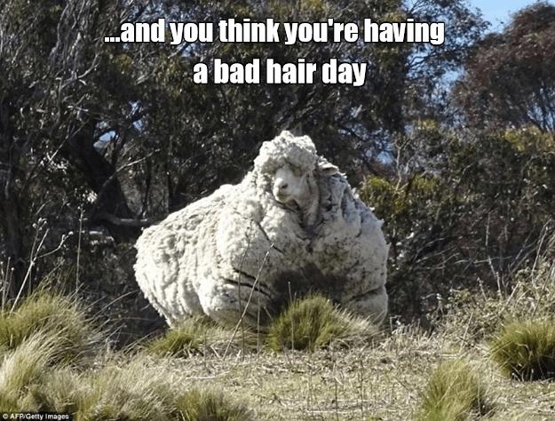 Bad Hair Day Animal Comedy Animal Comedy Funny Animals Animal Gifs