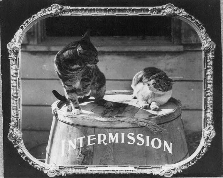 Cat - INTERMISSION