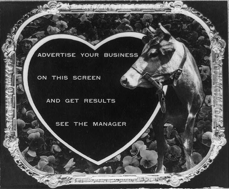 Horse - ADVERTISE YOUR BUSINESS ON THIS SCREEN AND GET RESULTS SEE THE MANAGER