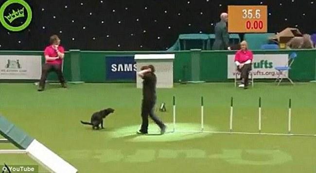 Dog sports - ptabty 35.6 0.00 SAMS ufts ufts.org YouTube