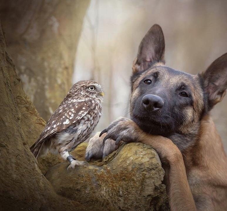 Dog staring lovingly at an owl in an outdoor setting.