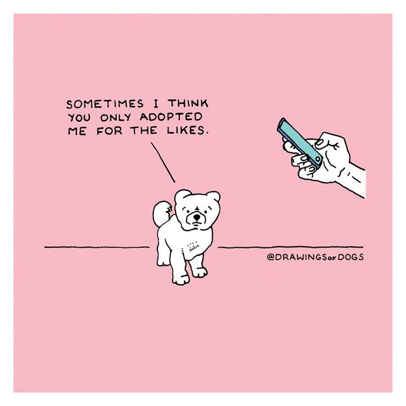 Text - SOMETIMES I THINK YOU ONLY ADOPTED ME FOR THE LIKES @DRAWINGSOF DOGS