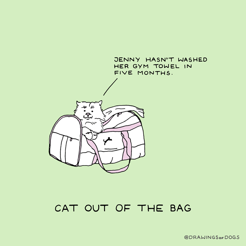 Text - JENNY HASN'T WASHED HER GYM TOWEL IN FIVE MONTHS. CAT OUT OF THE BAG @DRAWINGSOF DOGS
