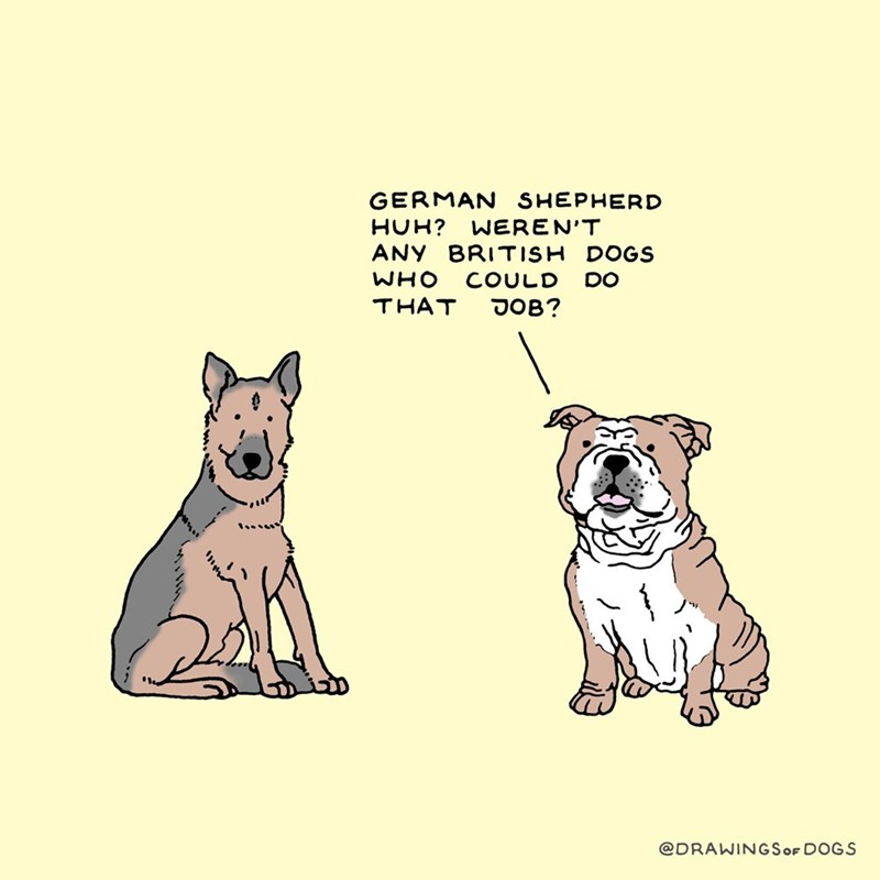 Mammal - GERMAN SHEPHERD WEREN'T BRITISH DOGS HUH? ANY WHO COULD DO JOB? THAT @DRAWINGSOF DOGS