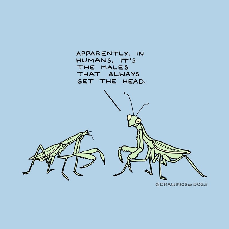 Insect - APPARENTLY, IN HUMANS, IT'S THE MALES THAT ALWAYS GET THE HEAD. A @DRAWINGSOF DOGS