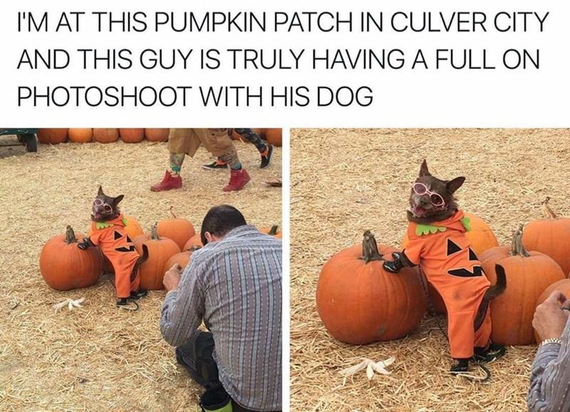 dogs pumpkins cute photoshoot doggo funny - 9149844224