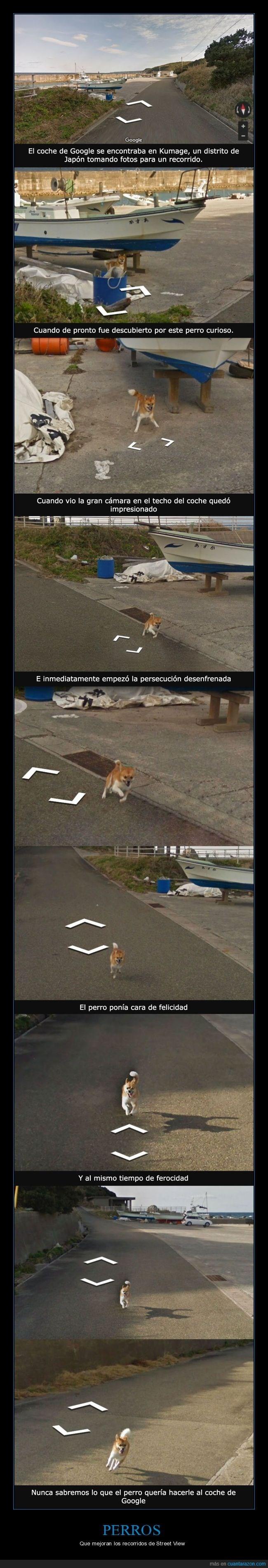 un perro persigue un carro de google