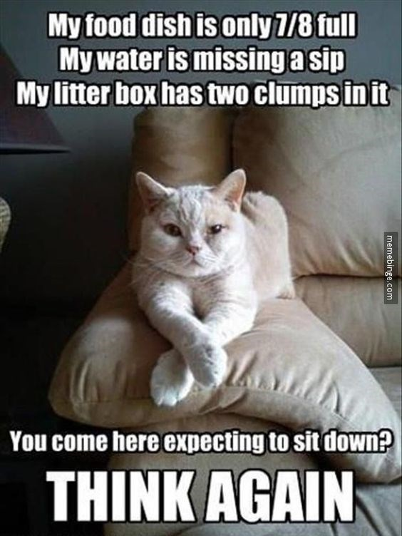 Cat - My food dish is only 7/8 full My water is missing a sip My litter box has two clumps in it You come here expecting to sit down? THINK AGAIN memebinge.com