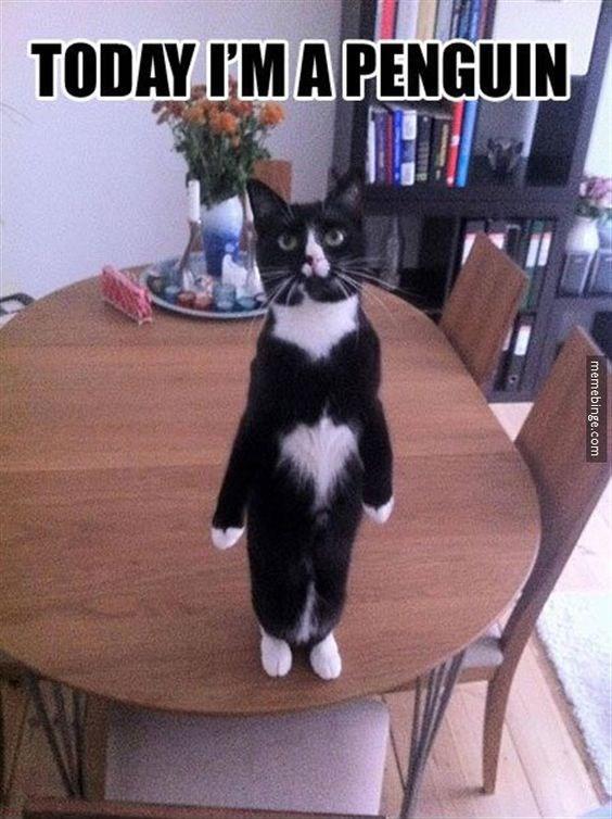 Cat - TODAY I'M A PENGUIN memebinge.com