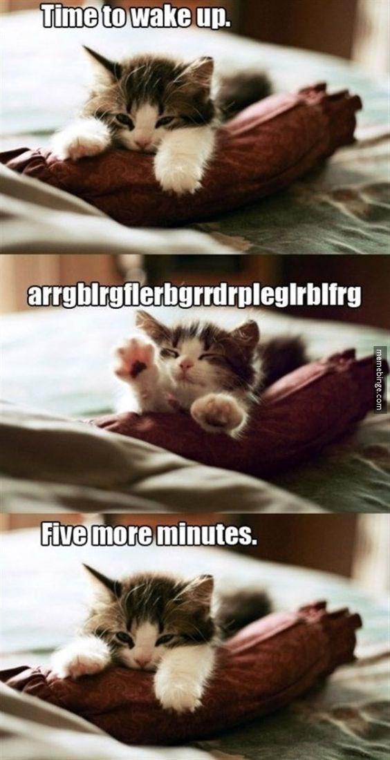 Cat - Time to wake up. arrgblrgflerbgrrdrplegirbifrg Five more minutes.