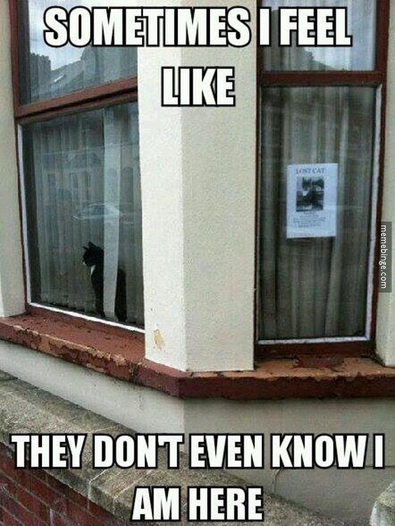 Door - SOMETIMES I FEEL LIKE 1OST CAT THEY DONTEVEN KNOWI AM HERE memebinge.com