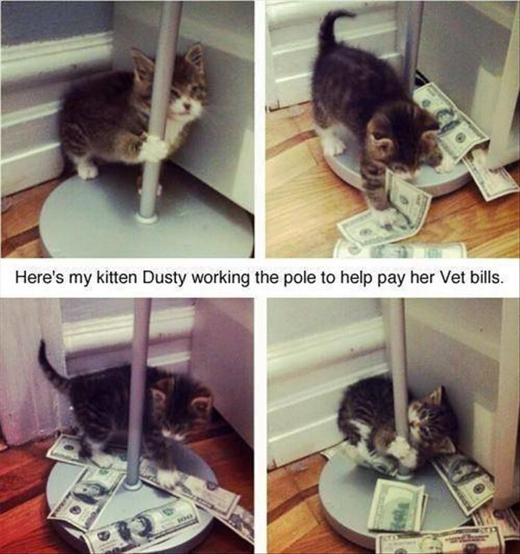 Cat - Here's my kitten Dusty working the pole to help pay her Vet bills.