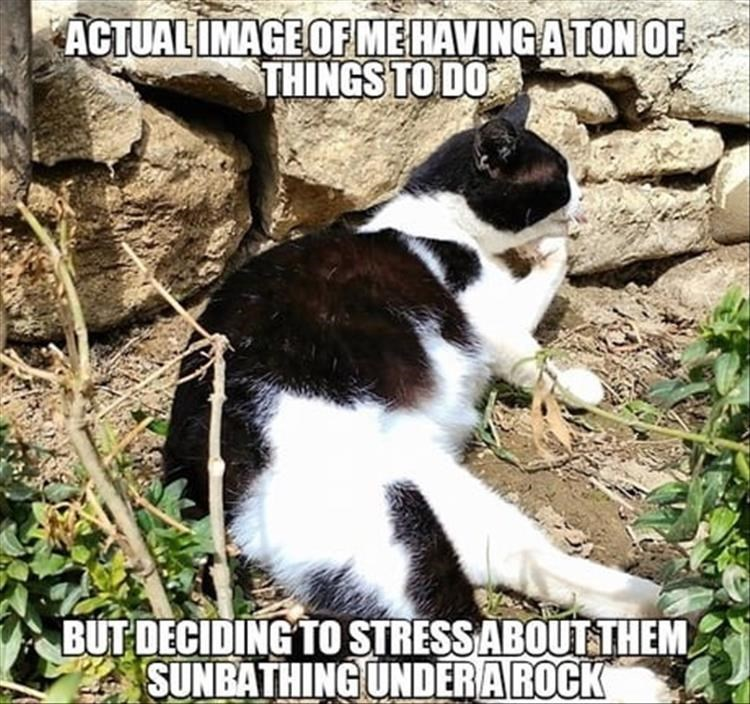 Photo caption - ACTUALIMAGEOF MEHAVING ATON OF THINGS TO DO BUT DECIDING TO STRESSABOUT THEM SUNBATHING UNDERAROCK