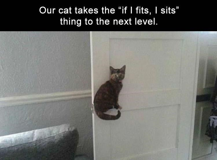 """Cat - Our cat takes the """"if I fits,I sits"""" thing to the next level."""