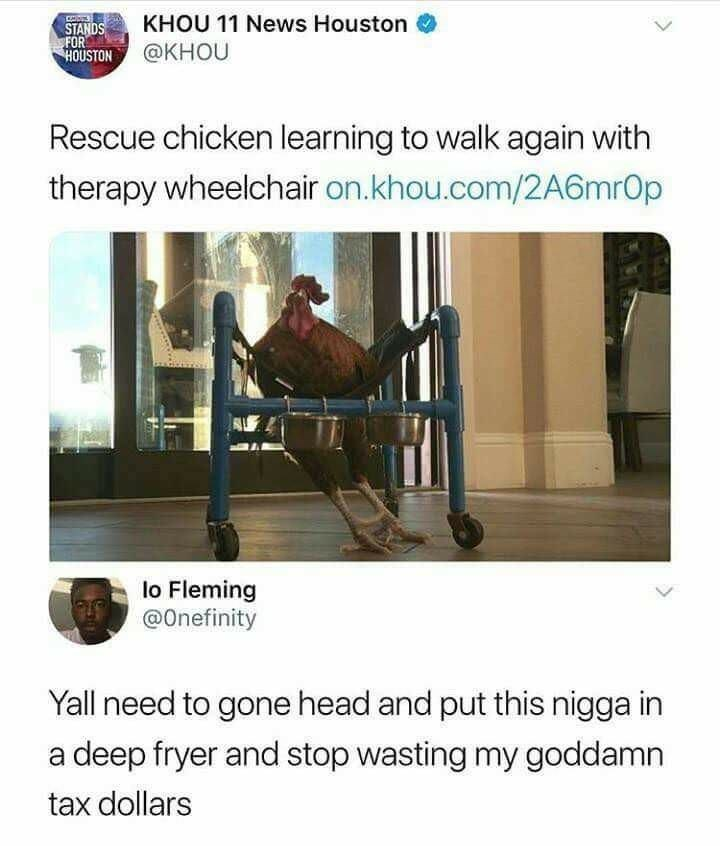 Product - KHOU 11 News Houston STANDS FOR HOUSTON@KHOU Rescue chicken learning to walk again with therapy wheelchair on.khou.com/2A6mrOp lo Fleming @Onefinity Yall need to gone head and put this nigga in deep fryer and stop wasting my goddamn tax dollars