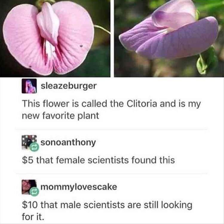 Funny meme about clitoria plant.
