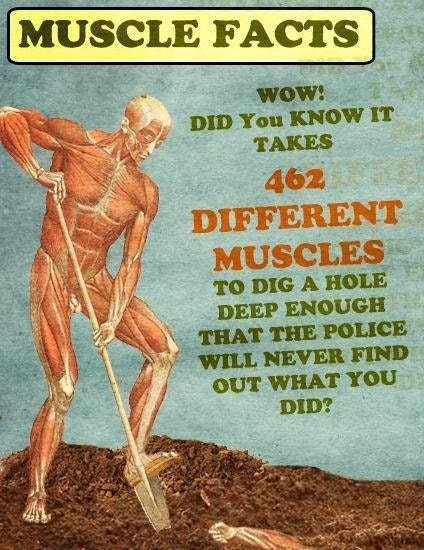 dank meme about muscle facts about how many muscles it take to dig grave holes