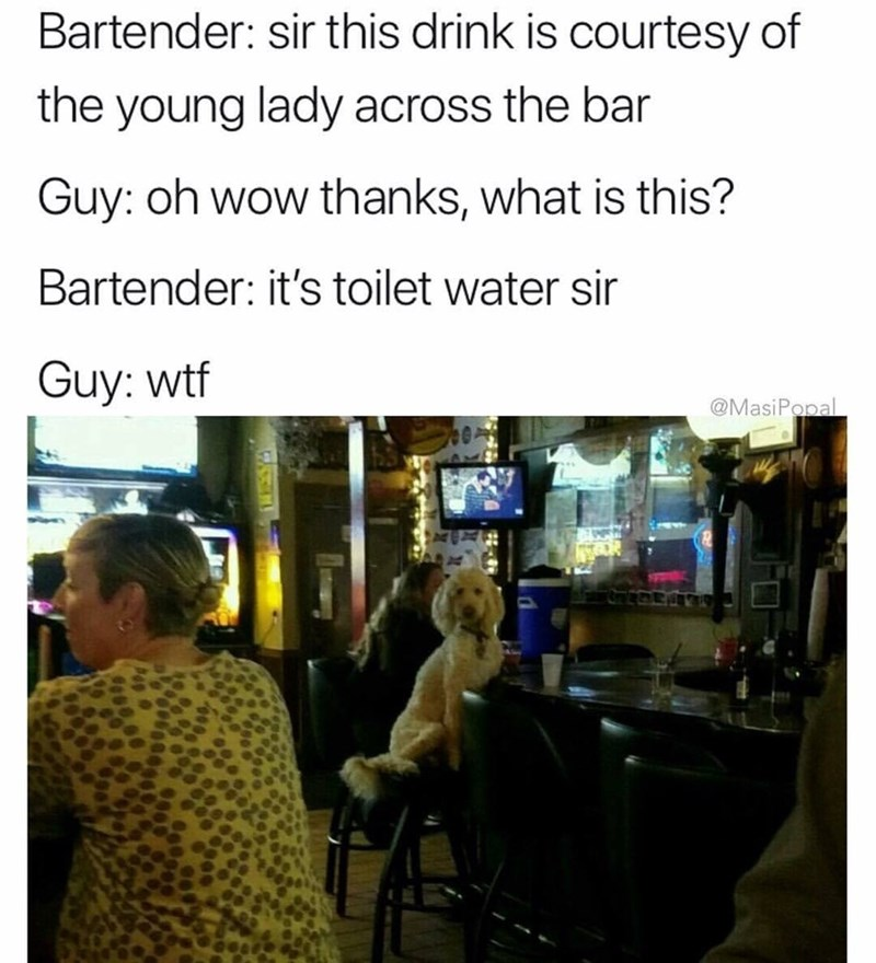 funny meme about dog sending guy a drink at the bar.