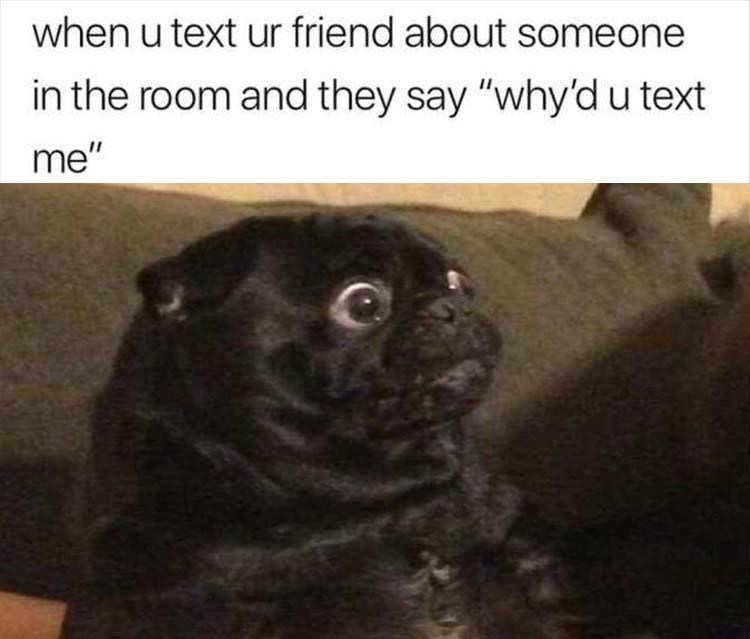 "Pug - when u text ur friend about someone in the room and they say ""why'd u text me"""
