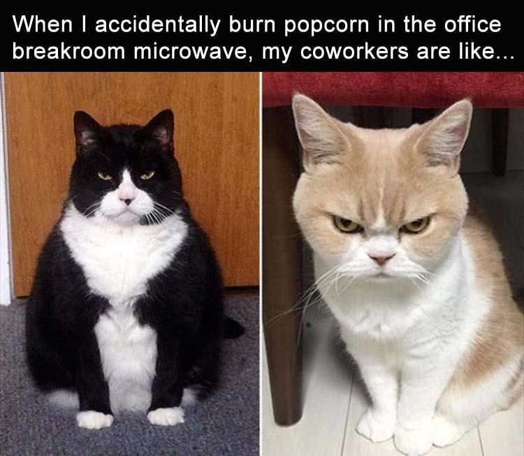 Cat - When I accidentally burn popcorn in the office breakroom microwave, my coworkers are like...