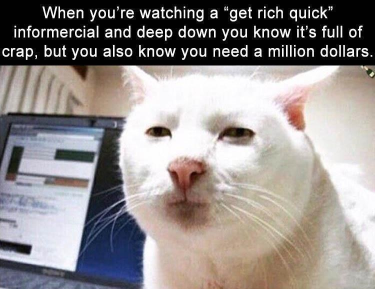 "Cat - When you're watching a ""get rich quick"" informercial and deep down you know it's full of crap, but you also know you need a million dollars."