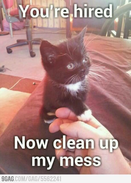 Cat - You're hired Now clean up my mess 9GAG.COM/GAG/5562241