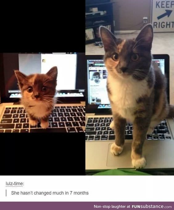 Cat - KEEP RIGHT AMAu lulz-time: She hasn't changed much in 7 months Non-stop laughter at FUNSubstance.com
