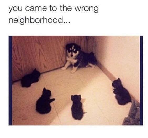 Text - you came to the wrong neighborhood...