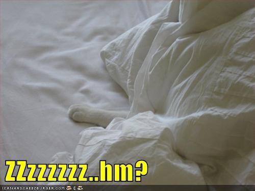 Cheezburger Image 9151191808