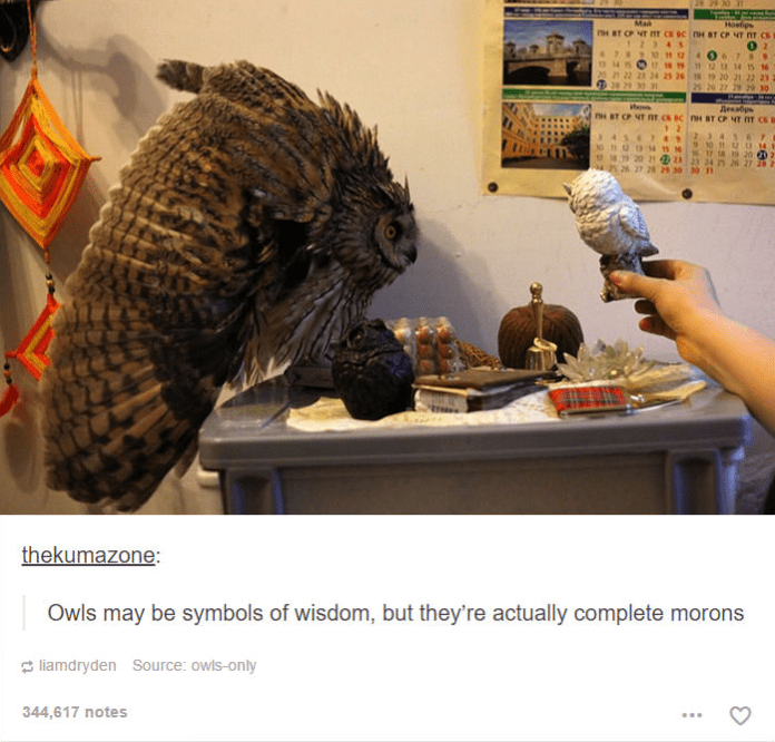 person holding small owl figurine to real owl real owl spreading wings in attack