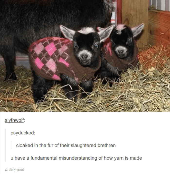 two baby goats wearing jumpers