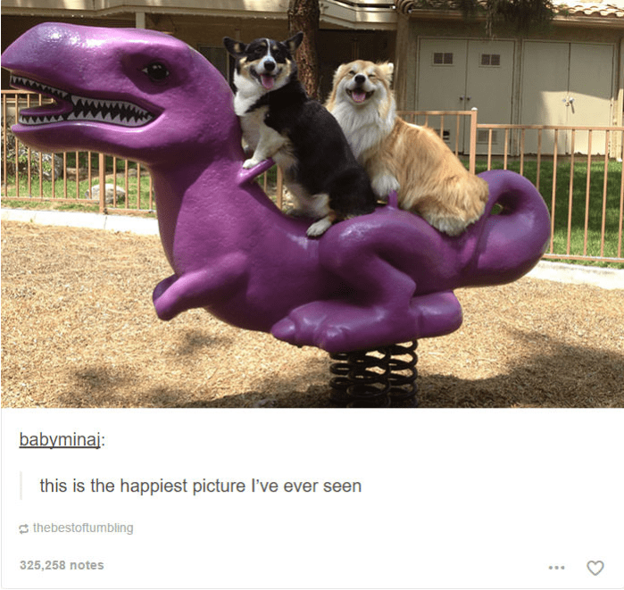 two dogs sitting on dinosaur ride at playground